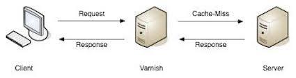varnish作用机制